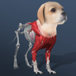 Idle Pet – Create cell by cell  APK (MOD, Unlimited Money) 4.9