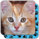 Puzzle Games free: Cute Cats 5.34.034 APK (MOD, Unlimited Money)