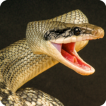 Anaconda Rampage: Giant Snake Attack 2.112 APK (MOD, Unlimited Money)