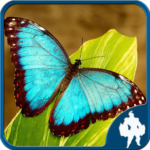 Butterfly Jigsaw Puzzles 1.9.0 APK (MOD, Unlimited Money)