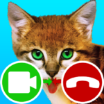 fake call video cat game 7.0 APK (MOD, Unlimited Money)
